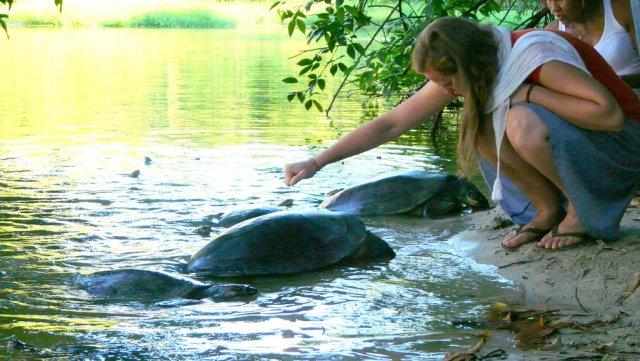 Ein grüne Teich voll von Schildkröten mit Autoreifendurchmesser. Die dicken Panzertiere sind hier geschützt, sonst wären sie von den Indianern schon längst verspeist.