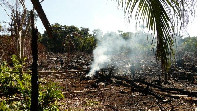 Brandrodung ist Umweltzerstörung? Nein, bei den Indios gehört es zur jahrhundertealten Tradition und ist Lebensgrundlage für Wald und Mensch zugleich.