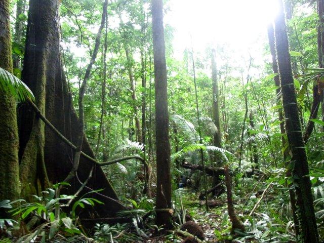 Der gewaltige Regenwald: Riesiege Bäume, alles ist grün und im Boden und auf den Bäumen leben unglaublich viel Tiere.