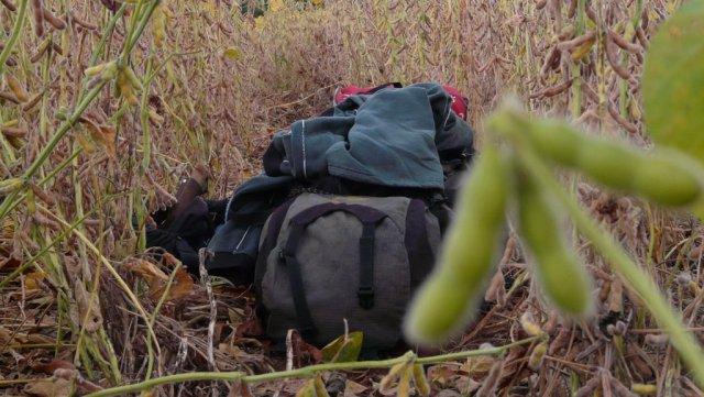Beim ersten Morgengrau bereits gepackt: Mein Rucksack im Sojafeld.