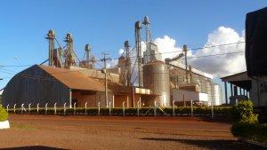 Die regionalen Großabnehmer bestimmen den Preis - bisher fair für die Bauern.
