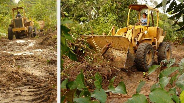 Schneisen für Stromleitungen im Urwald werden gebaut.