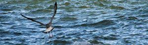 Ein Adler auf den Wellen des Baikalsees. Weshalb die Natur beschützen, wenn man sie nur über den Fernseher kennt.
