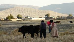 Pflügende Bauern am Titicacasee